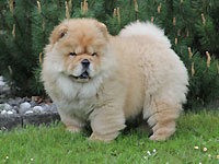 Album - Chows - 2014 - Pearl-2