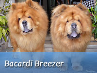 B-Wurf: Bacardi Breezer (Sheriff II) - Spotlight
