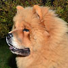 "B-Wurf: Brilliant Balouga of Swiss Limited Edition ""Balouga"" - Dezember 2011 - Spotlight"