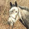 Bilder - Pferde - 1 - 1992 - Park im April, Stall Beliar