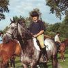 Bilder - Pferde - 1993 - Geländetraining in Aarau