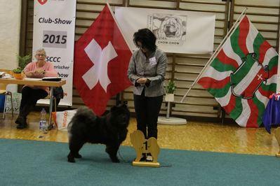 News - Chows - 2015 - SCCC Clubschau - Ronja-3