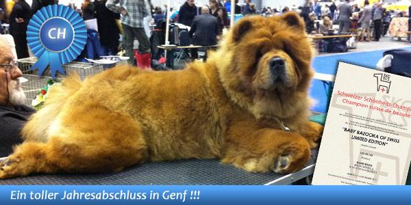 News - Chows - 2013 - Genf - Bazooka - Spotlight