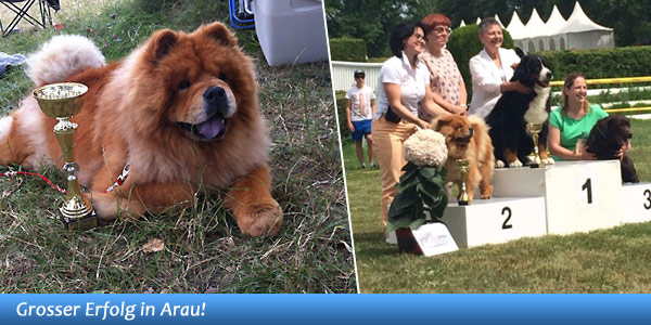 News - Chows - 2014 - Aarau - Spotlight