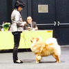News - Chows - 2015 - Offenburg - Pearl