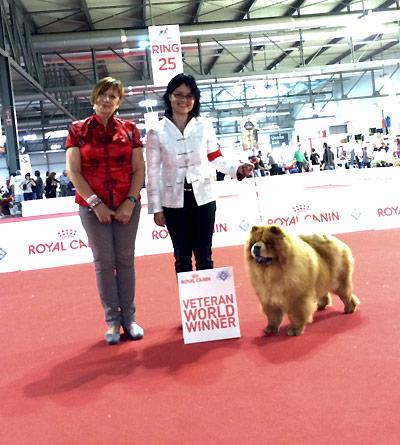 News - Chows - 2015 - Worlddogshow Milano