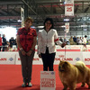 News - Chows - 2015 - Worlddogshow Milano-4