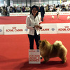 News - Chows - 2015 - Worlddogshow Milano-2