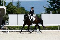 Unsere Pferde - Bilder 2014-6