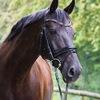 Unsere Pferde - Bilder 2014-22