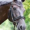 Unsere Pferde - Bilder 2014-24