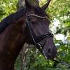 Unsere Pferde - Bilder 2014-27