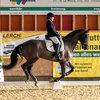 Unsere Pferde - Bilder 2017 - Rendezvous, Aarau