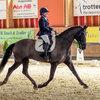 Unsere Pferde - Bilder 2017-4 - Rendezvous, Aarau