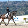 Unsere Pferde - Bilder 2017 - Fürstin von Worrenberg-8