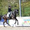 Unsere Pferde - Bilder 2017 --2
