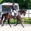 Unsere Pferde - Bilder 2017-4