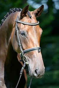 Unsere Pferde: Dream Girl