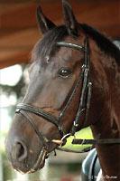 Album - Pferde - 2010 - Fotoshooting mit Nadja (4)