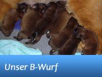 Unser B-Wurf - geboren am 15.05.2011