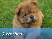 Unser B-Wurf - 7 Wochen alt