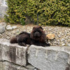 Album - Chows - 2021 - Milly der Sport Chow Chow-5