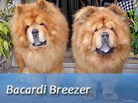 B-Wurf: Bacardi Breezer (Sheriff II) - Spotlight 2018