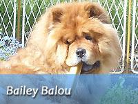 B-Wurf: Bailey Balou - Spotlight - 2013-05