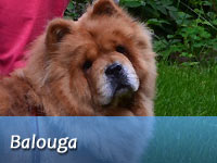 "B-Wurf: Brilliant Balouga of Swiss Limited Edition ""Balouga"""