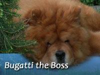 B-Wurf: Bugatti the Boss (Hassan VIII)