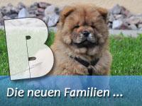 Die B-Welpen & ihre neuen Familien