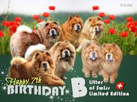 B-Wurf: der 7. Geburtstag
