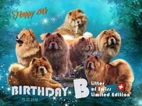 B-Wurf: der 8. Geburtstag
