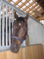 Bilder - Pferde - 2007 - Im Stall