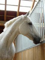 Bilder - Pferde - 2007 - Hallo Nachbar