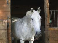 Bilder - Pferde - 2007 - Cheeese