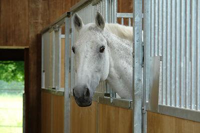 Bilder - Pferde - 2007 - Wacher Blick