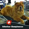 News 2012 - Lausanne - Alinghi Championesse