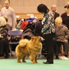 News 2013 - CRUFTS - Alinghi (3)