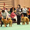 News 2013 - CRUFTS - Alinghi (2)