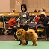 News 2013 - CRUFTS - Alinghi (1)