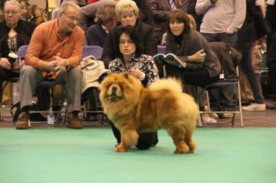 News 2013 - CRUFTS - Alinghi (4)