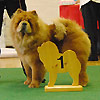 News - Chows - Clubschau 2011 - Alinghi