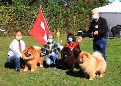 News - Chows - 2020 - CAC Zugersee