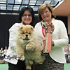 News - Chows - 2014 - St-Gallen - BEST BABY IN SHOW