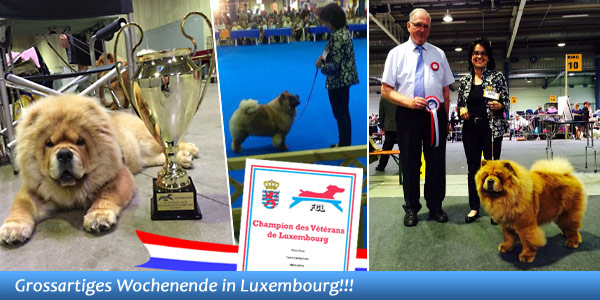 News - Chows - 2014 - Luxembourg