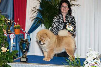 News - Chows - 2014 - Luxembourg - Pearl