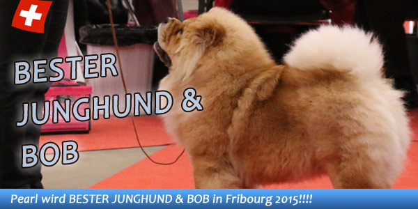 News - Chows - 2015 - Fribourg - Spotlight