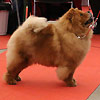 News - Chows - 2015 - Fribourg - Unicca-2