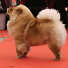 News - Chows - 2015 - Fribourg - Pearl-3